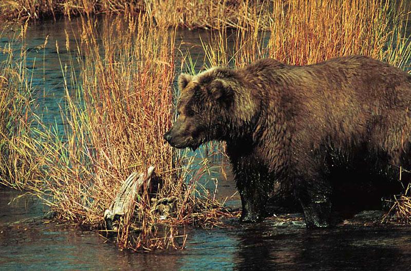 Alaska_0