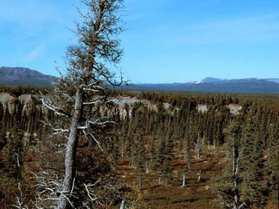 Alaskan Tundra (3)