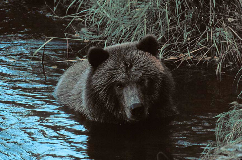 Alaska_8