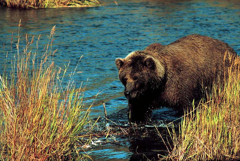 Alaska_9