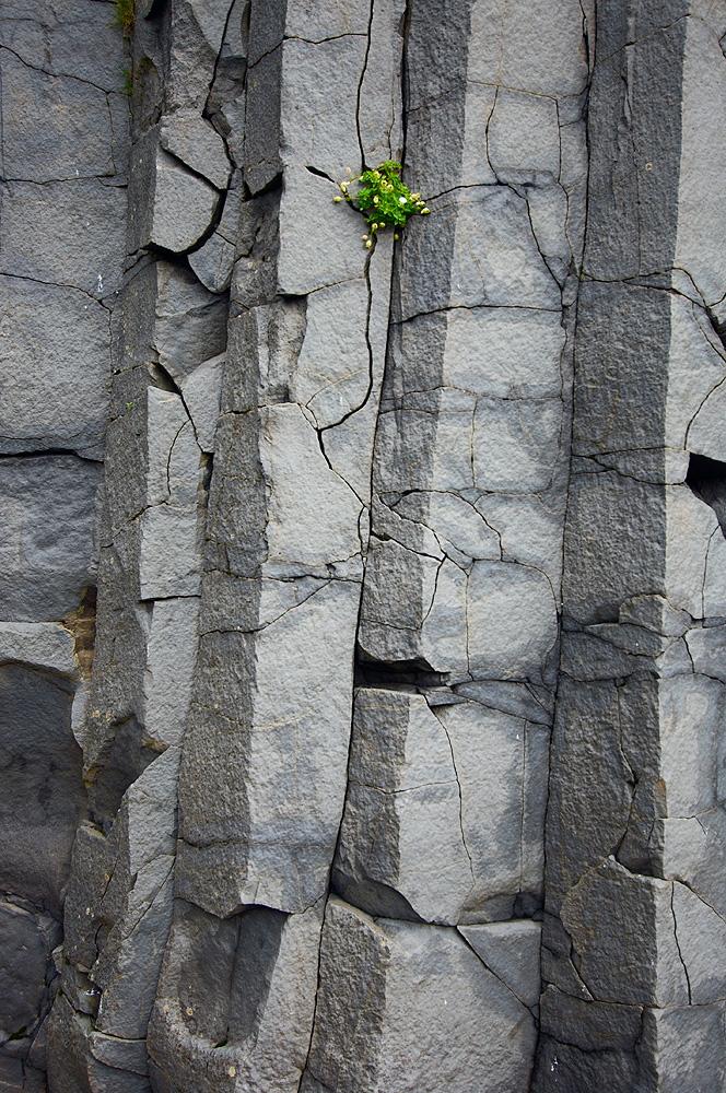 Columnar_Basalt4B