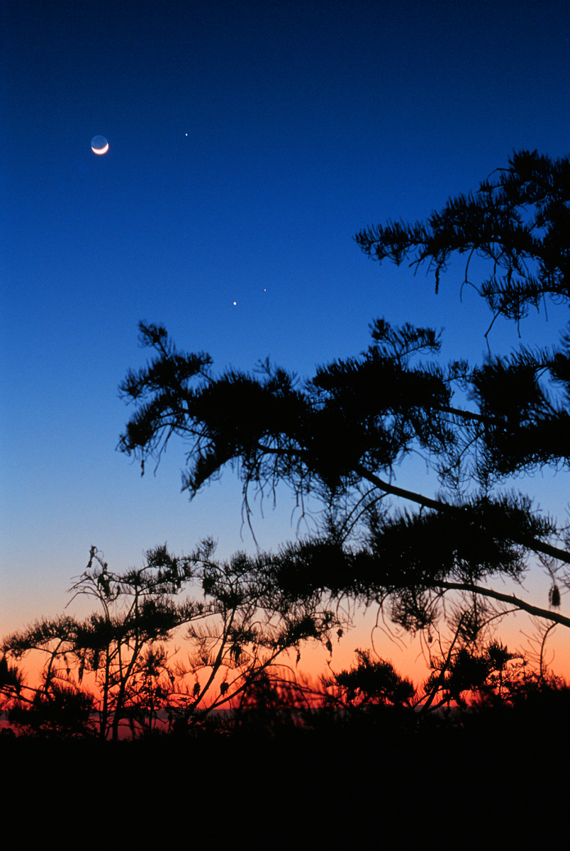 Conjunction_-_Everglades