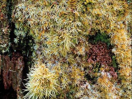 Rainforest Fauna (1)