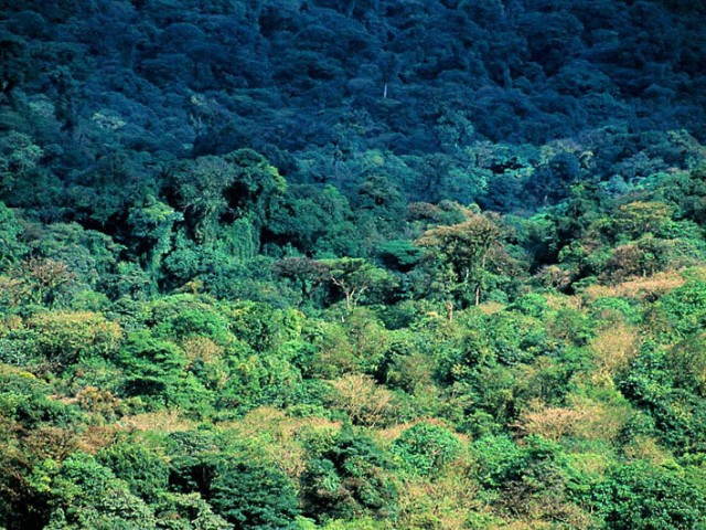 Cloudforest Canopy – Monteverde