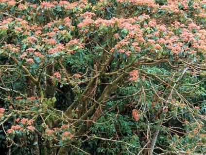 Rainforest Fuana (3)