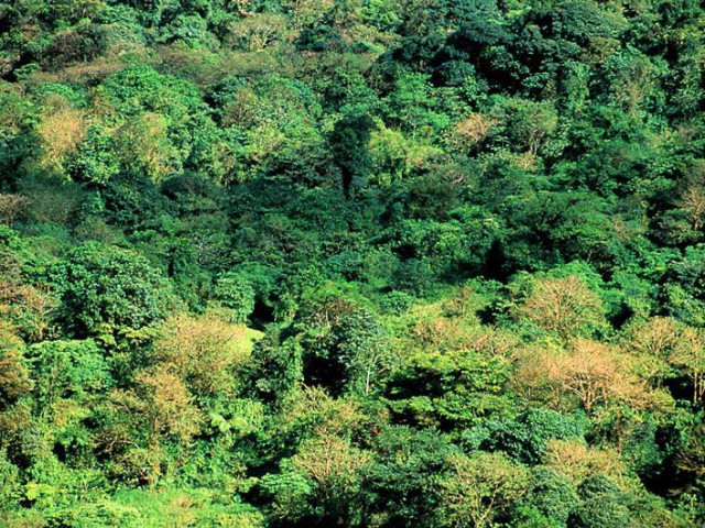 Rainforest Canopy – Arenal Volcano