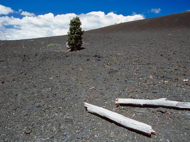 Kilauea Landscape