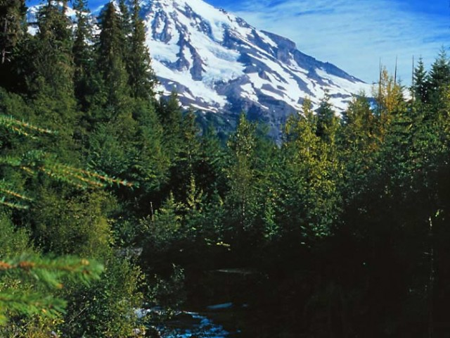 Mount Rainier from Kautz Creek