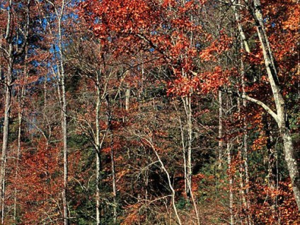 Pishgah Forest
