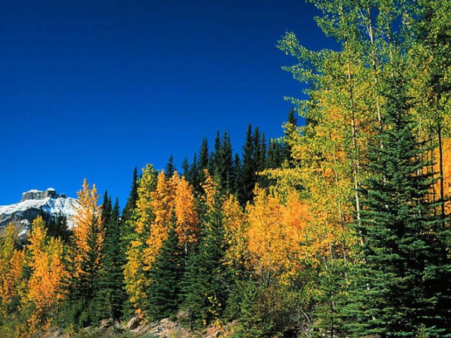 Fall Colors – Banff National Park