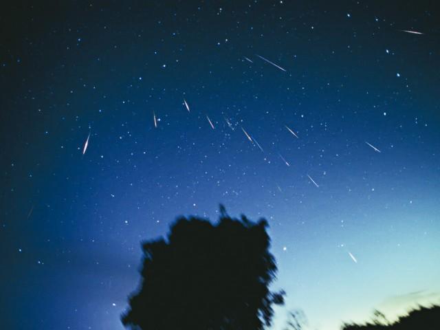 2001 Leonid Meteors (1)